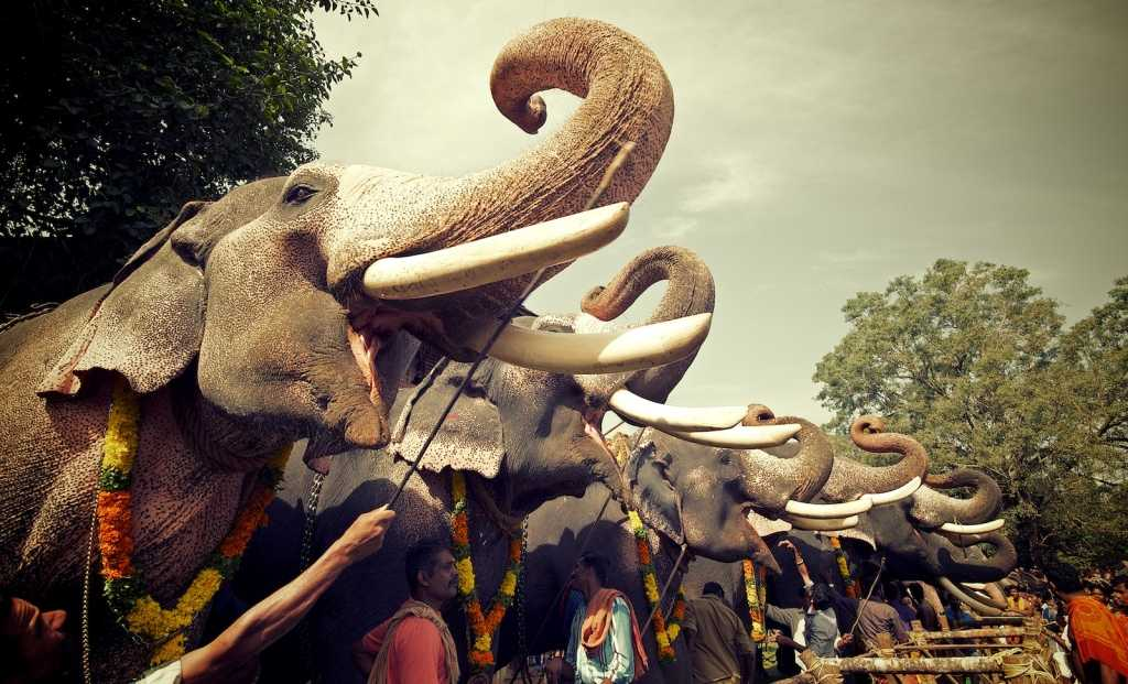 Visit the annual Thrissur pooram in Kerala