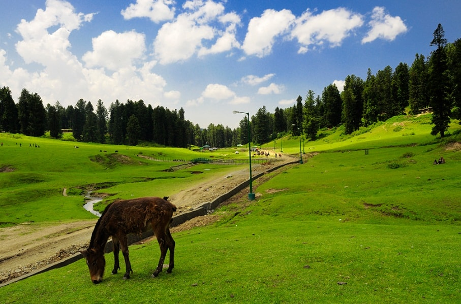 Yusmarg - Best Destination to Visit in Kashmir